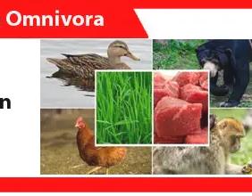 Hewan-omnivora-definisi-ciri-sistem-pencernaan-contoh